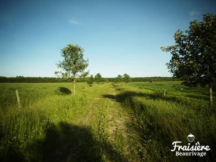 Photographie © Fraisière Beaurivage